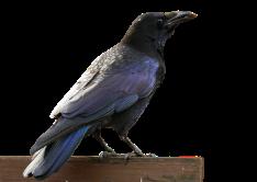 bird-1849269_960_720